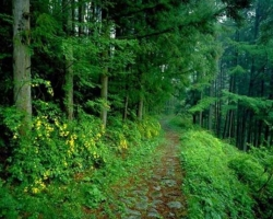carpathian way in the forest