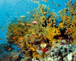 شاطئ ومحمية راس محمد