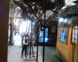 متحف الاحياء المائية بالاسكندرية