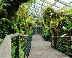 حديقة سنغافورة النباتية