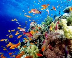 الحاجز المرجانى الكبير فى استراليا