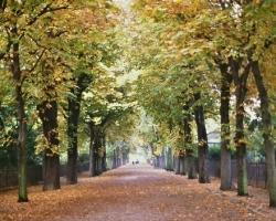 غابة بولونيا فى باريس