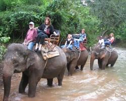 حديقة الفيلة فى تايلاند