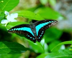 حديقة الفراشات فى كوالامبور