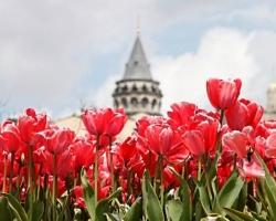 مهرجان التوليب - اسطنبول