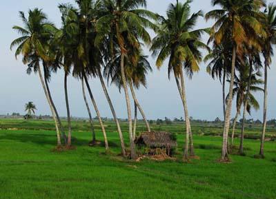 السياحة في أمبارا