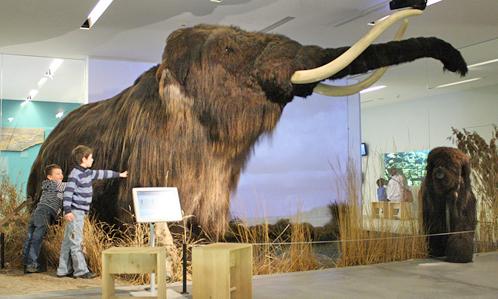 معالم السياحة في لوزيرن سويسرا متحف الطبيعة