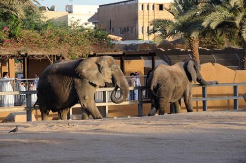 حديقة الحيوان الرياض السعودية المسافرون العرب