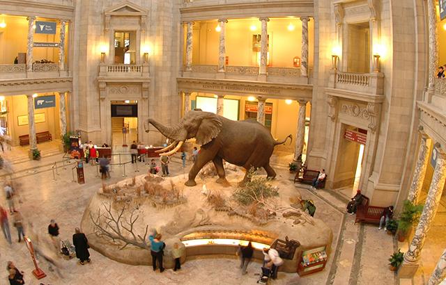 المتحف الوطني للتاريخ الطبيعي - واشنطن العاصمة امريكا المسافرون العرب