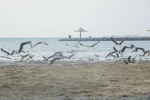 محمية جزر ام القماري