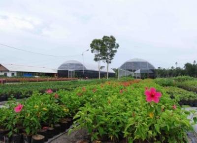 حديقة بانغكا النباتية
