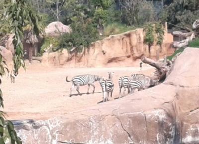 حديقة حيوان لى كورنيل