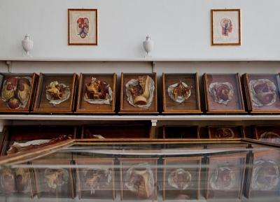 متحف جوزيفينوم الطبى