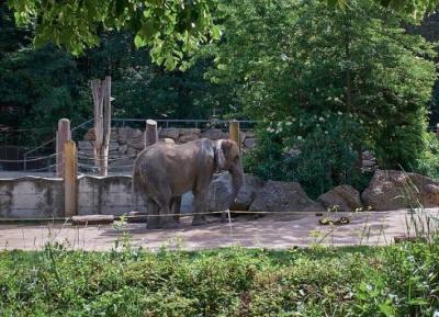 حديقة حيوانات فيينا شوشنبرون
