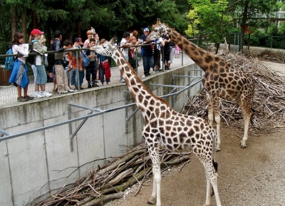 حديقة حيوان شميدينغ