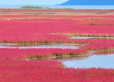 بحيرة نوتورو-كو
