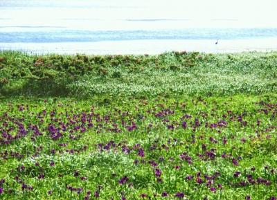 حديقة ازهار شبه جزيرة نوتسوك البرية