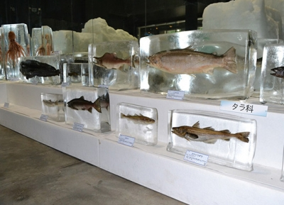 متحف أوخوتسك الجليدي البحري في هوكايدو