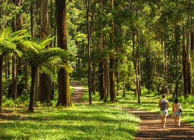 غابة شيربروك