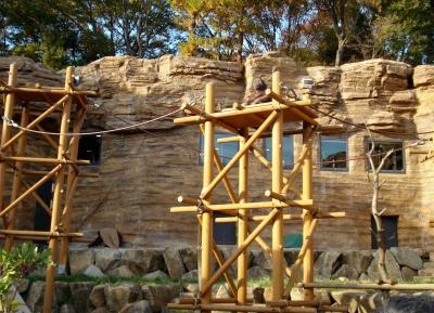 حديقة حيوان تاما