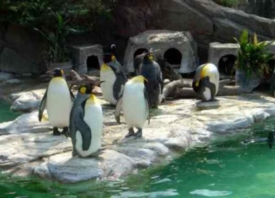 حديقة حيوان إينو