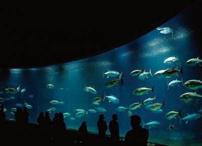 منتزه طوكيو للحياة البحرية
