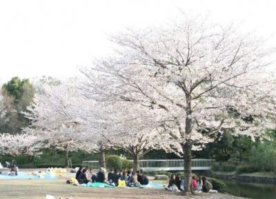 حديقة كيتانومارو