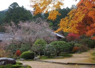 معبد جيكو