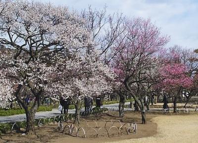 حديقة كايراكوين