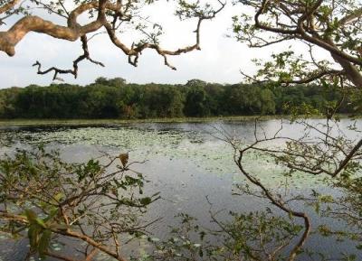 حديقة ويلباتو الوطنية