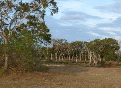 حديقة لونوغامفيرا الوطنية