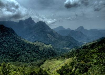 محمية غابة ناوكلز