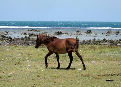 منطقة دلفت للخيول البرية