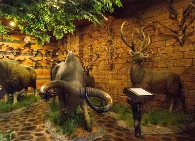 متحف قرون الحيوانات