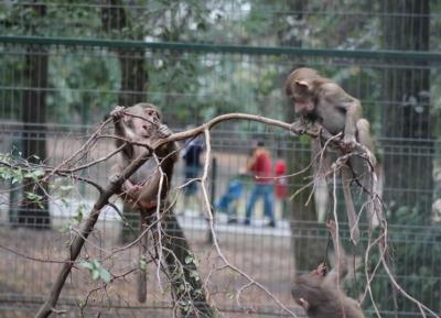حديقة حيوان تارجو موريش
