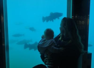 المرصد تحت الماء