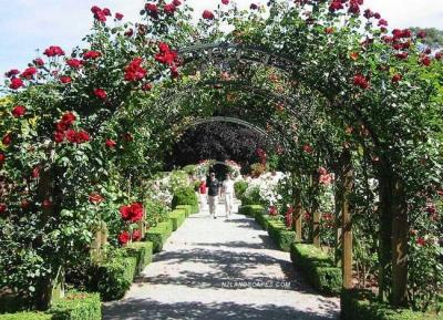 حديقة بارنيل روز