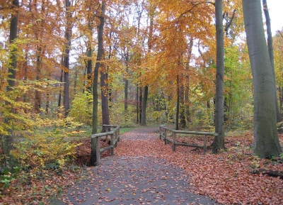 غابة آيلنريده