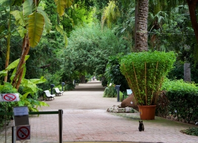 الحديقة النباتيه