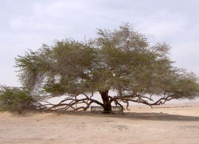 شجرة الحياة  و مركز الزوار