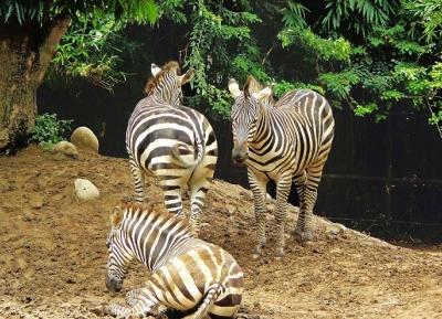 حديقة حيوانات أليبور
