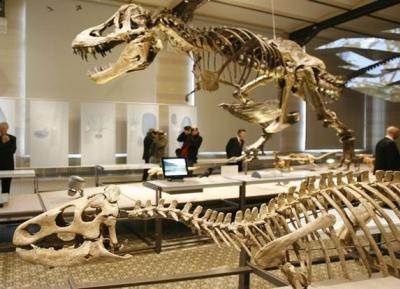 متحف العلوم الطبيعيه