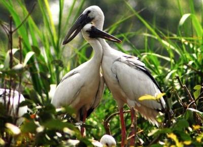 حديقة طائر اللقلق لانغ البري