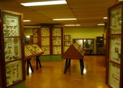 متحف الحشرات
