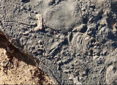 حفريات جبل حريم