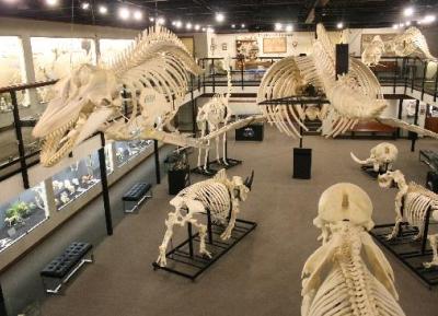 متحف علم العظام