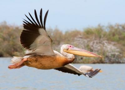 حديقة دجودج الوطنية للطيور