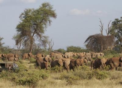 محمية سامبورو الوطنية