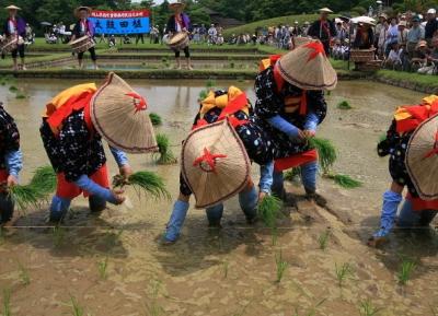 مهرجان زراعة الأرز Otaue