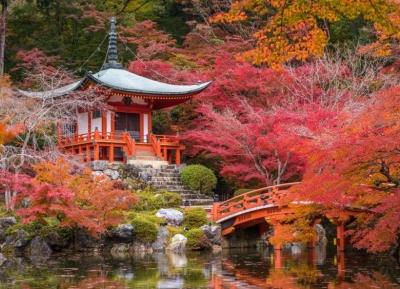 أوراق الخريف في هاكوني